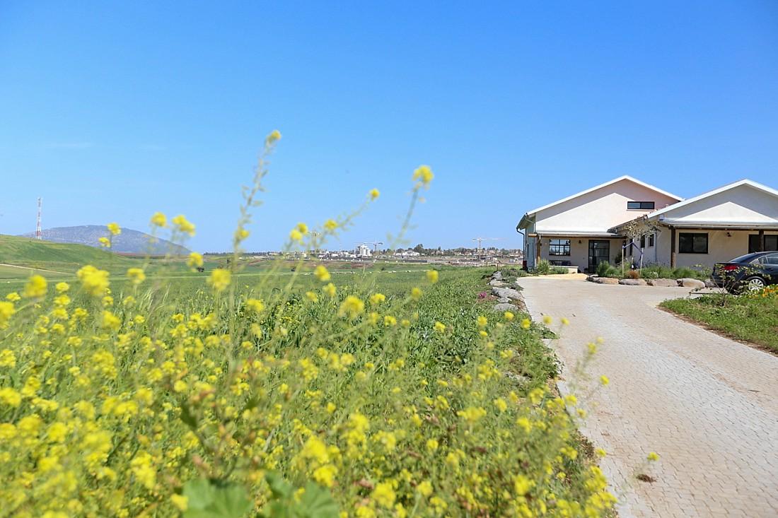 בית עם נוף של שדות פרחי חרדל